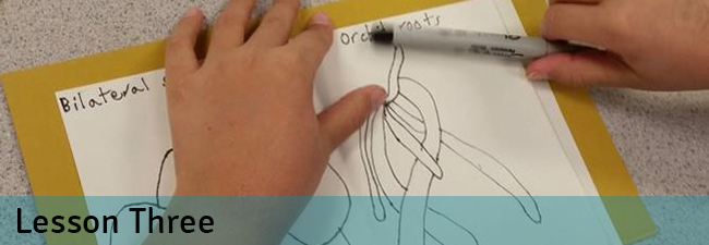 Biomimicry lesson three